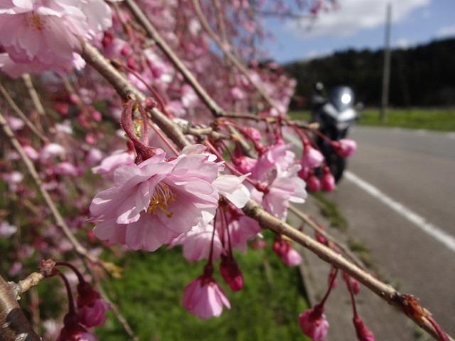 2020/04/14 MTS ソロツーリング to 宝達山一周