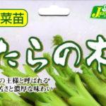 2020/05/23 六兵衛's Garden 植栽はじめ(タラの芽)